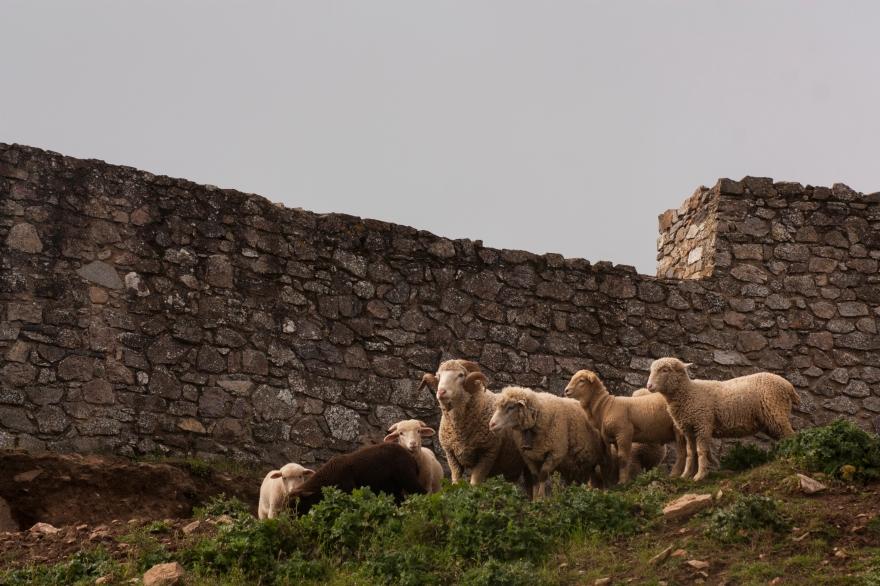 Aracena Moutons