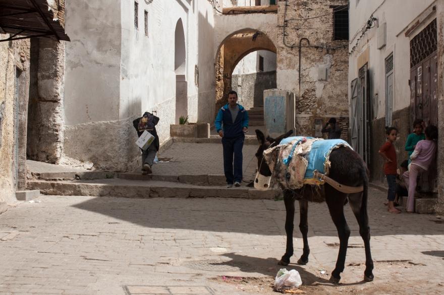 Fes donkey